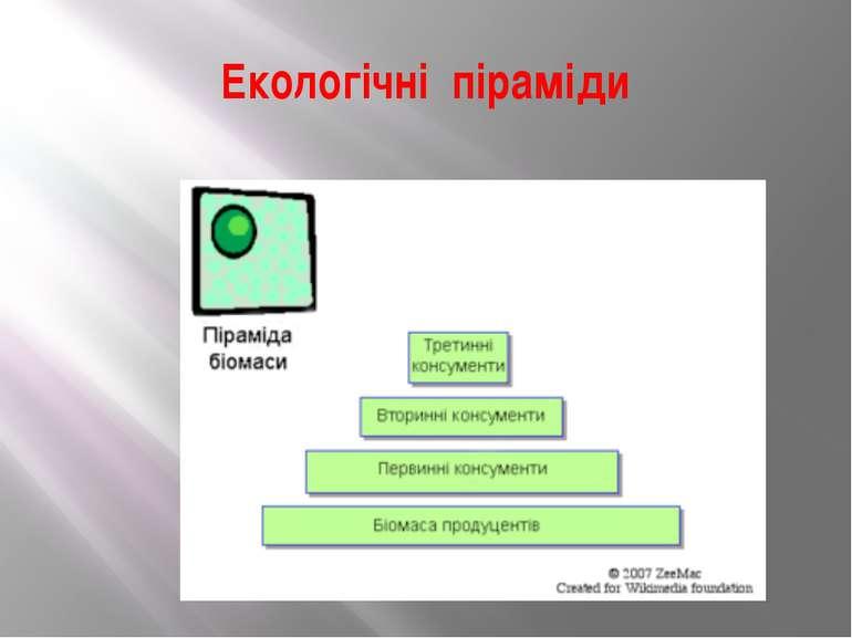 Екологічні піраміди