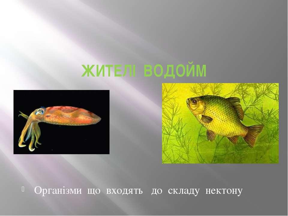 ЖИТЕЛІ ВОДОЙМ Організми що входять до складу нектону