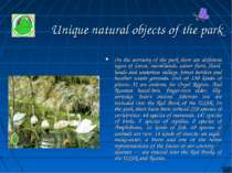 Unique natural objects of the park On the territory of the park there are dif...