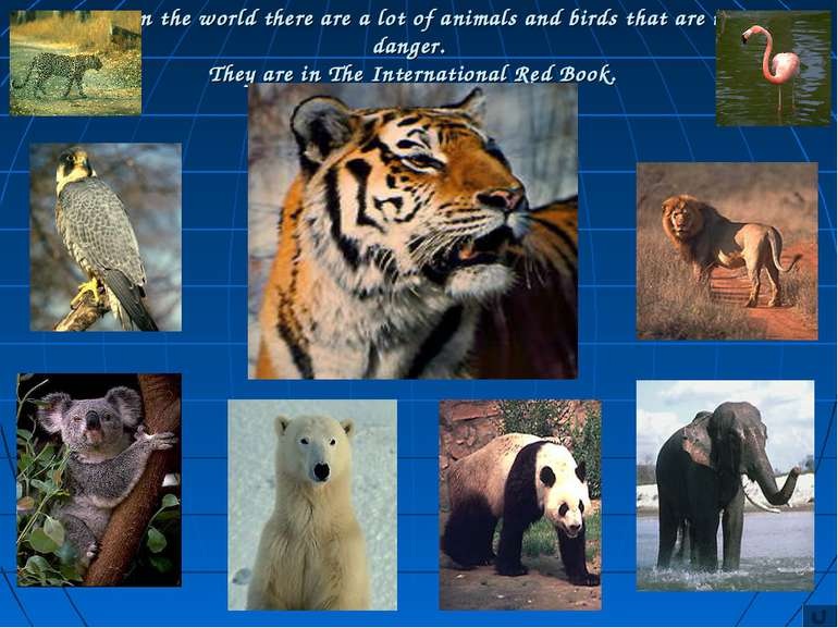 In the world there are a lot of animals and birds that are in danger. They ar...