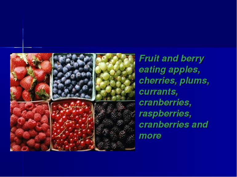 Fruit and berry eating apples, cherries, plums, currants, cranberries, raspbe...