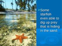 Some starfish even able to dig up prey that is hiding in the sand.