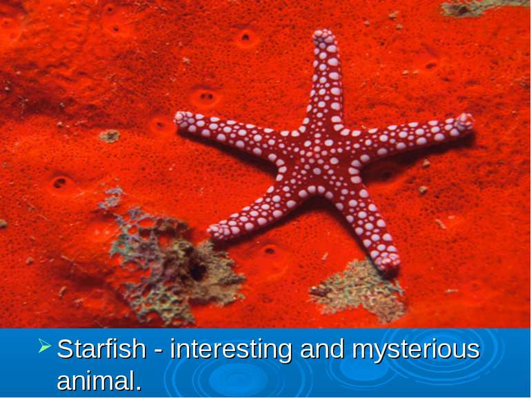 Starfish - interesting and mysterious animal.