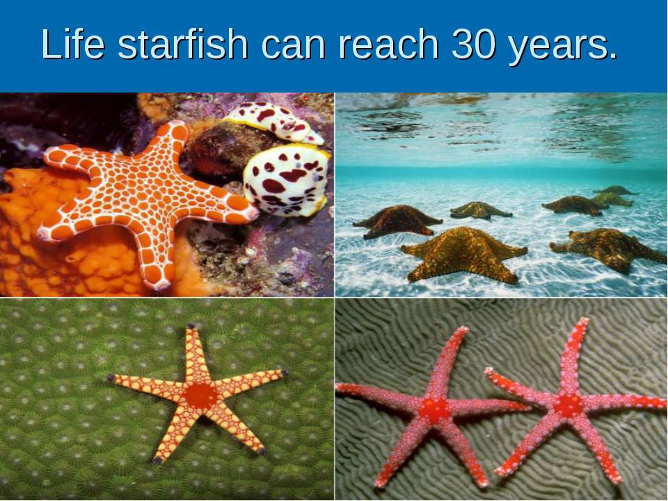 Life starfish can reach 30 years.