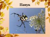 Павук Сидить у куточку і тче сорочку.
