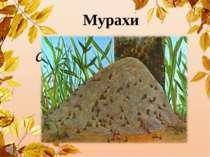 Мурахи Серед лісу горбик-дім, Тисячі живуть у нім. Працелюбні ці комахи: Добр...