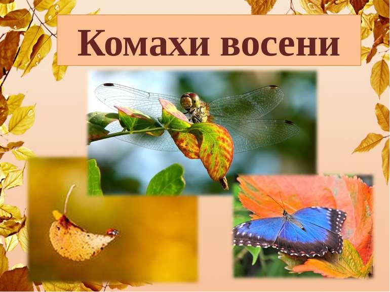 Комахи восени