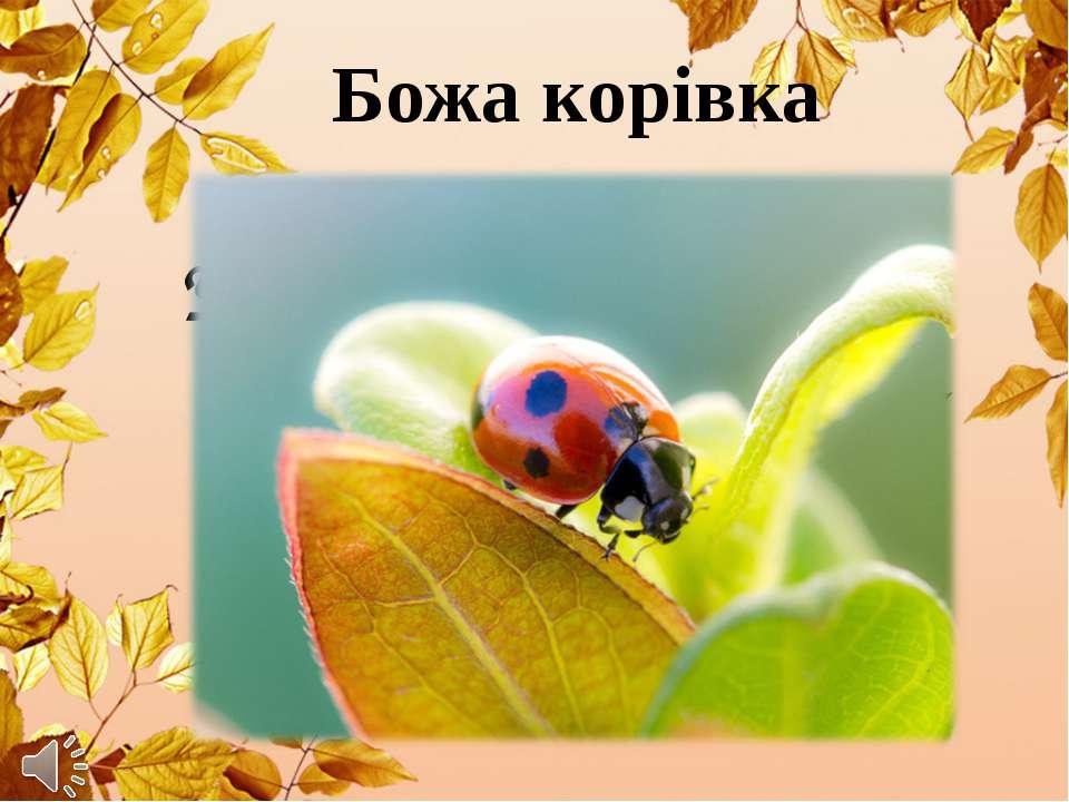 Божа корівка У червоного малятки На спині краплинки – цятки, Чорні вуса, голо...
