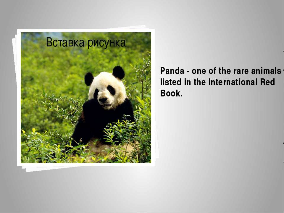 Panda-one of the rareanimals listed in theInternational Red Book.