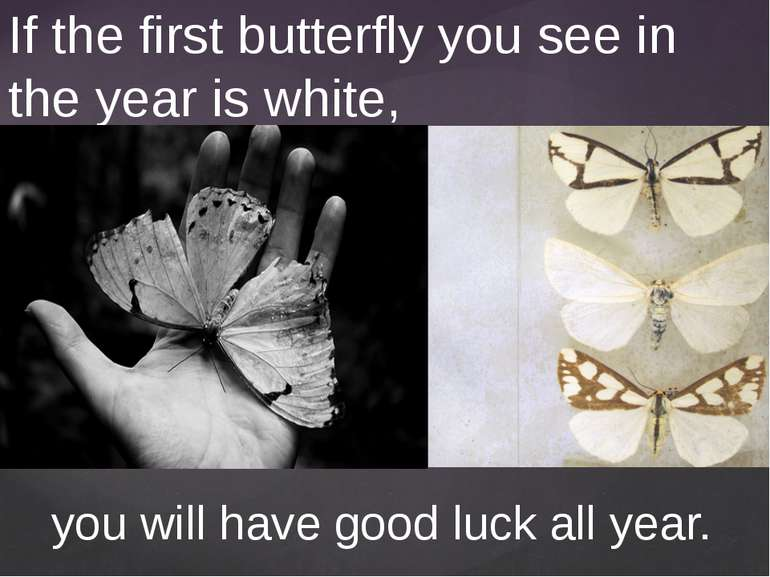 If the first butterfly you see in the year is white, you will have good luck ...