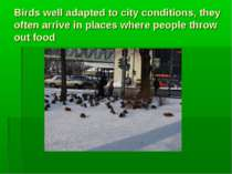 Birds well adapted to city conditions, they often arrive in places where peop...