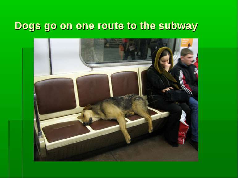 Dogs go on one route to the subway