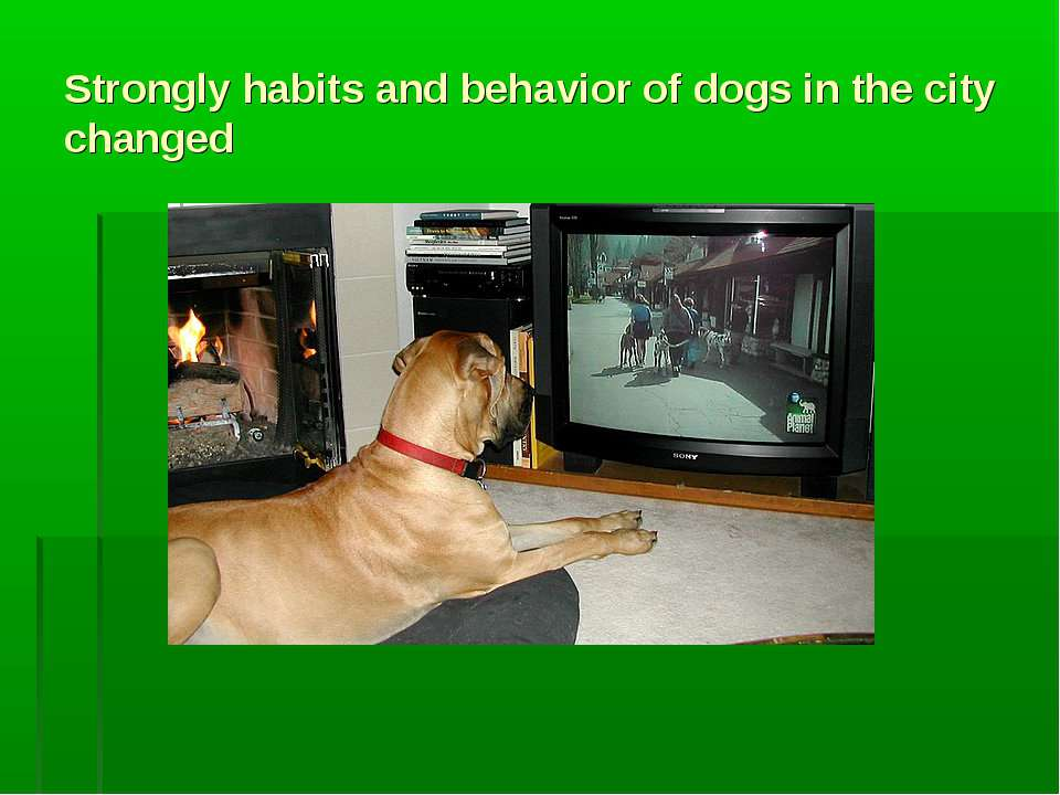 Strongly habits and behavior of dogs in the city changed