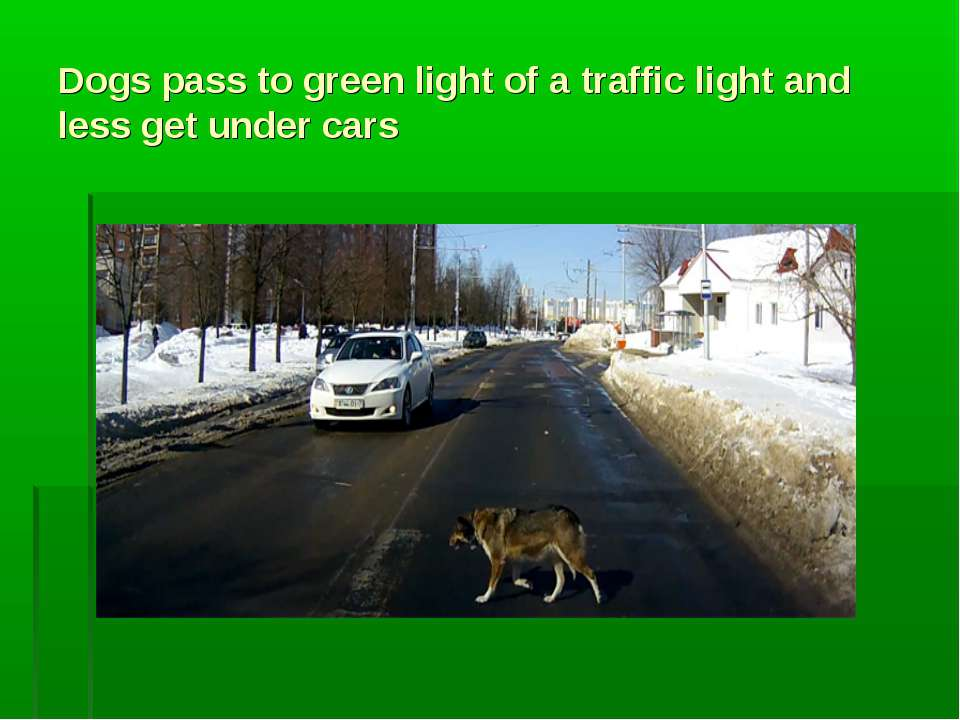 Dogs pass to green light of a traffic light and less get under cars