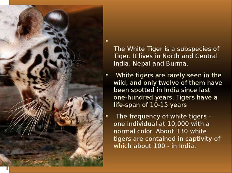 The White Tiger is a subspecies of  Tiger. It lives in North and Central Indi...