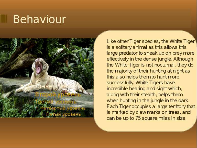 Behaviour Like other Tiger species, the White Tiger is a solitary animal as t...