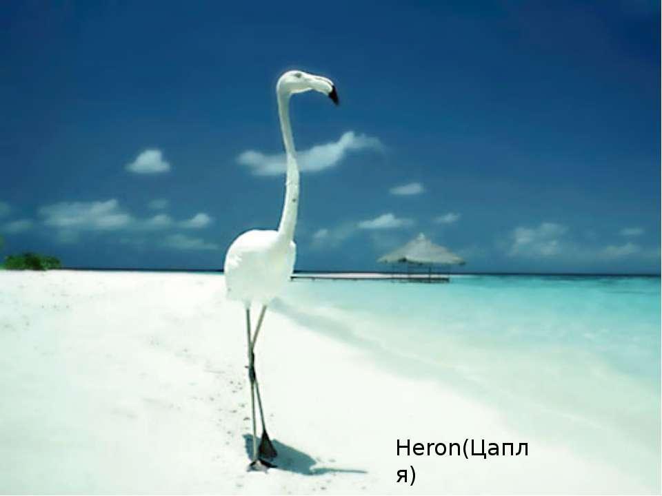 Heron(Цапля)