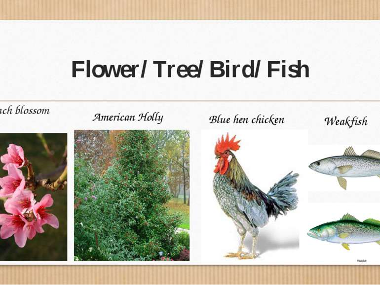 Flower/ Tree/ Bird/ Fish Peach blossom American Holly Blue hen chicken Weakfish