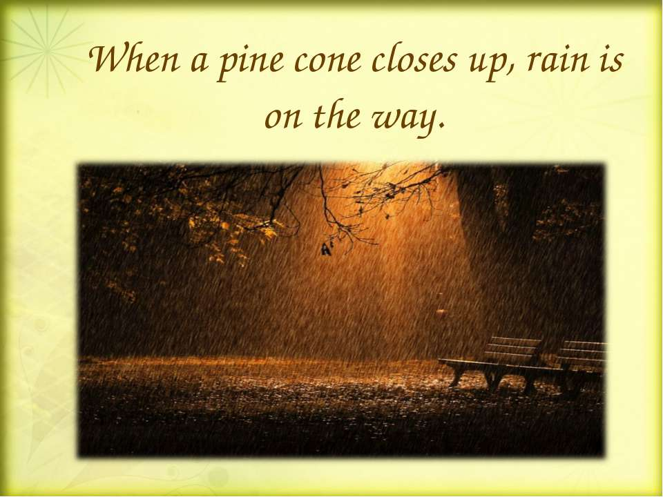 When a pine cone closes up, rain is on the way.