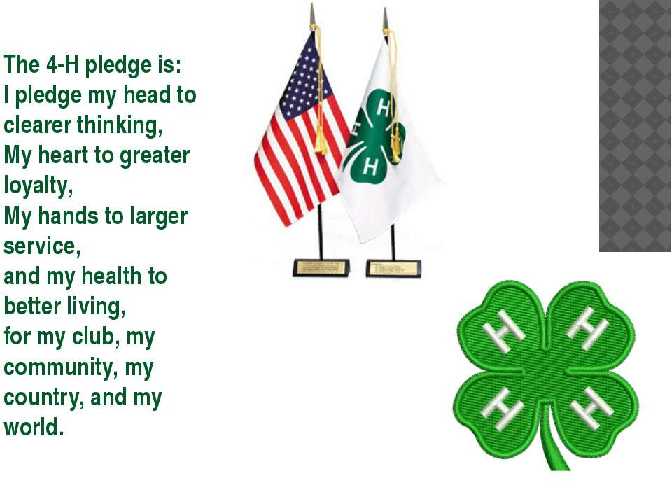 The 4-H pledge is: I pledge my head to clearer thinking, My heart to greater ...