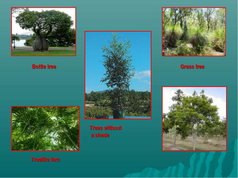 Bottle tree Treelike fern Trees without a shade Grass tree