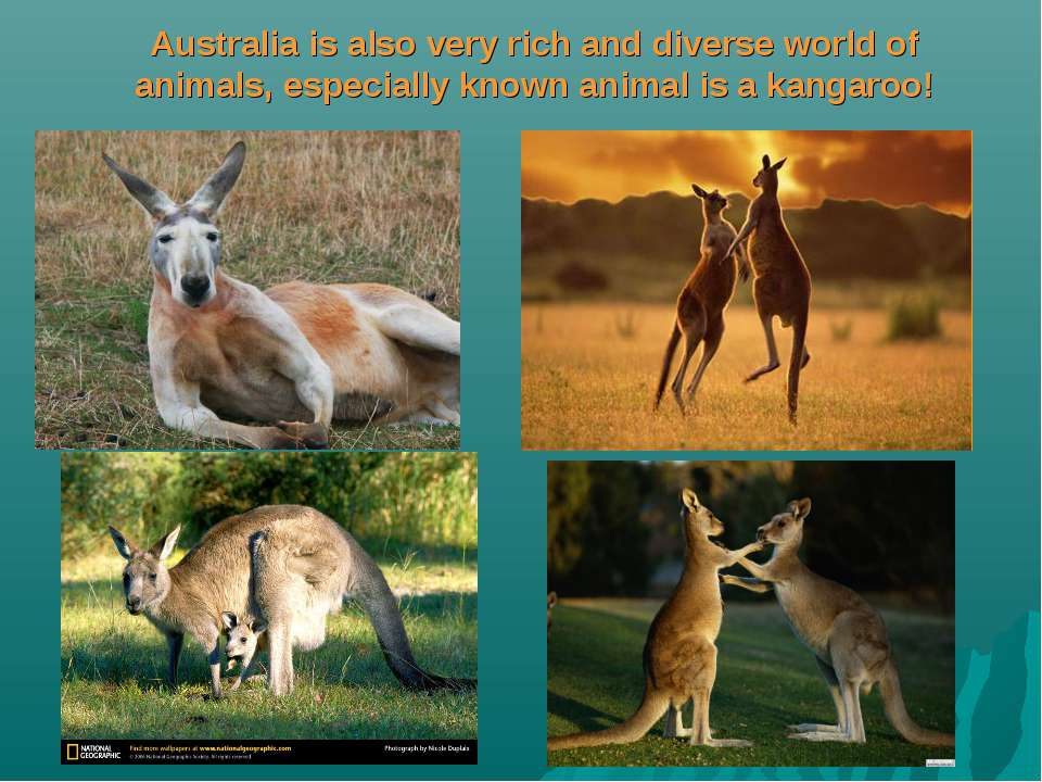 Australia is also very rich and diverse world of animals, especially known an...