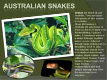Snakes are found all over Australia. There are about 140 species of land snak...