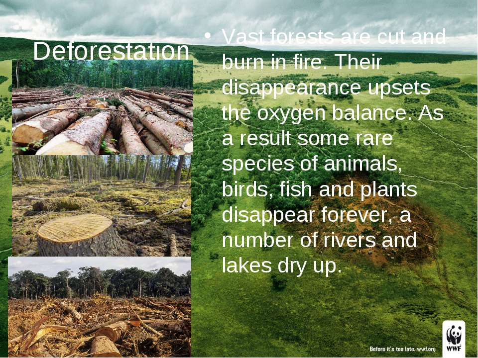 Deforestation Vast forests are cut and burn in fire. Their disappearance upse...