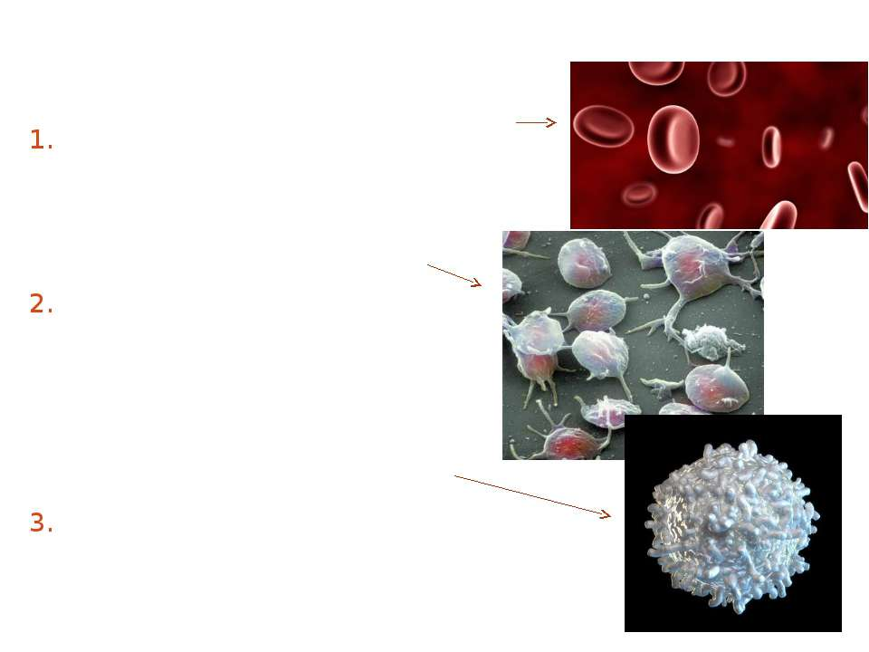 Blood is composed of plasma and formed elements (cells): Red blood cells (ery...