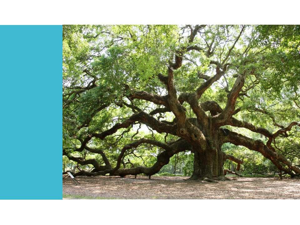 Tree Oak