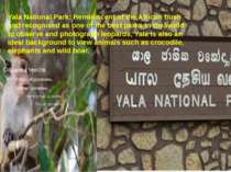 Yala National Park:Reminiscent of the African bush and recognised as one of ...