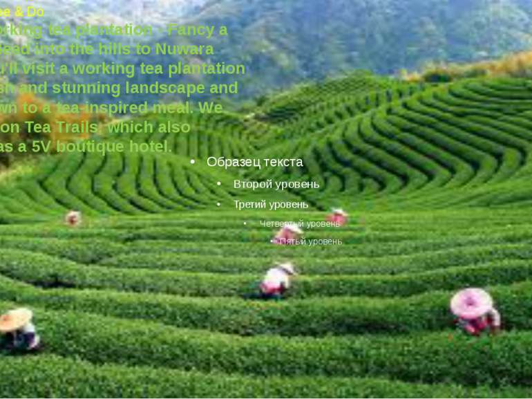 Things to See & Do Visit a working tea plantation- Fancy a cuppa? Head into ...