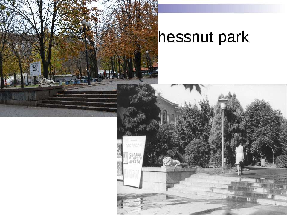 Chessnut park