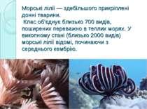 Морські лілії — здебільшого прикріплені донні тварини. Клас об'єднує близько ...