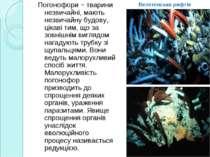 Погонофори − тварини незвичайні, мають незвичайну будову, цікаві тим, що за з...