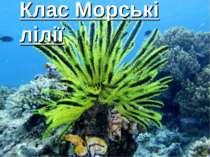 Клас Морські лілії
