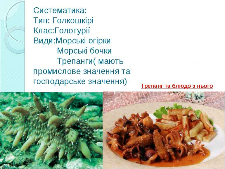 Систематика: Тип: Голкошкірі Клас:Голотурії Види:Морські огірки Морські бочки...