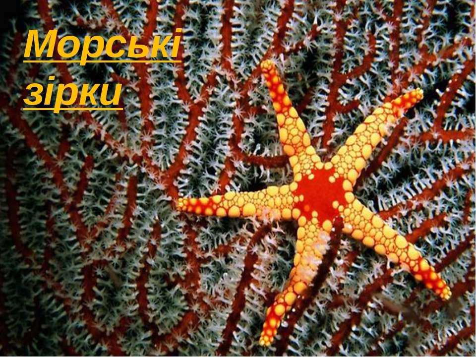 Морські зірки