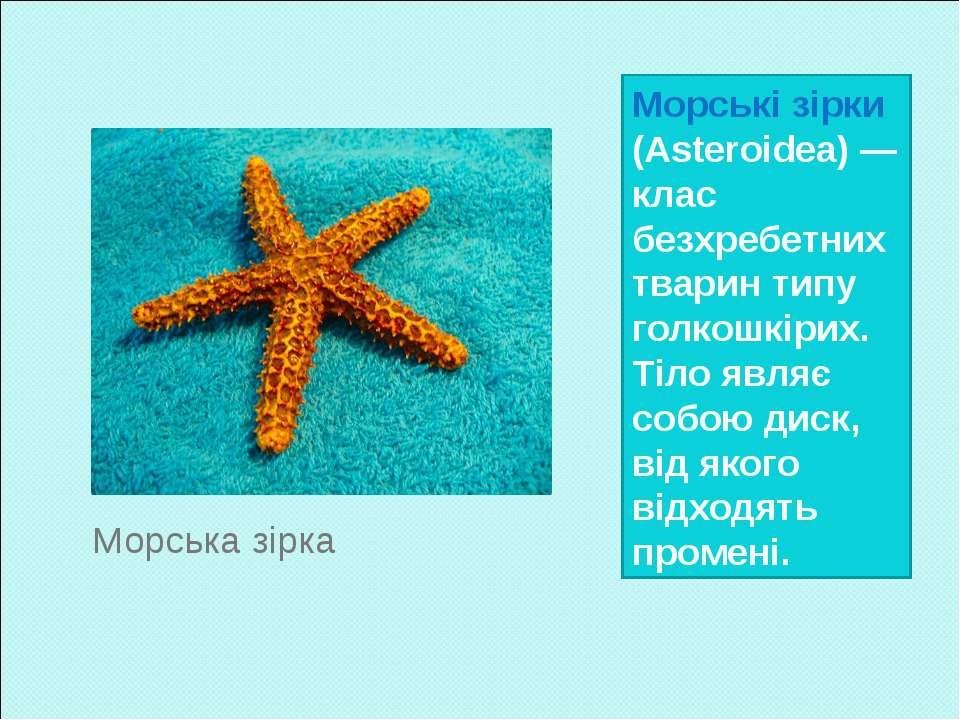 Морські зірки (Asteroidea) — клас безхребетних тварин типу голкошкірих. Тіло ...