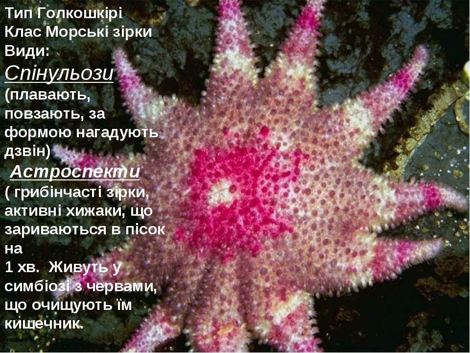 Тип Голкошкірі Клас Морські зірки Види: Спінульози (плавають, повзають, за фо...