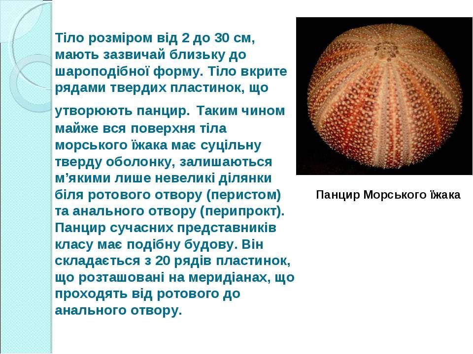 Тіло розміром від 2 до 30 см, мають зазвичай близьку до шароподібної форму. Т...