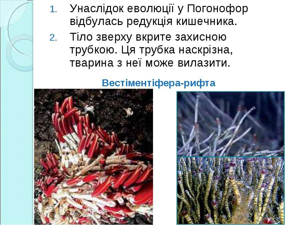 Унаслідок еволюції у Погонофор відбулась редукція кишечника. Тіло зверху вкри...