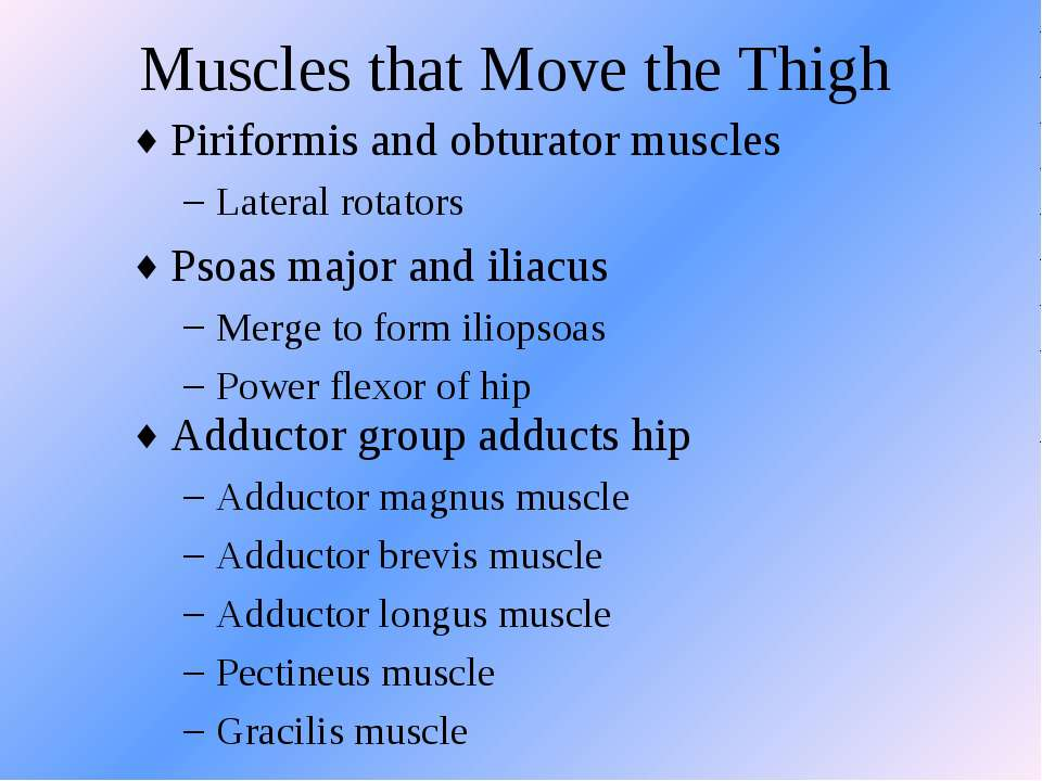 Muscles that Move the Thigh Piriformis and obturator muscles Lateral rotators...