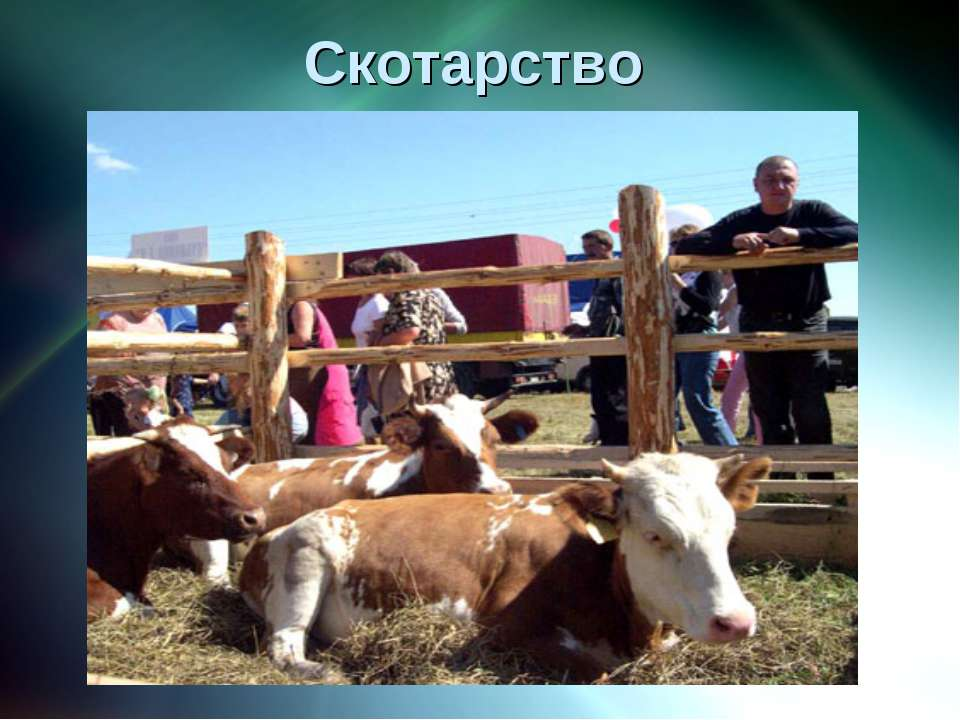 Скотарство