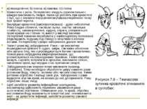 а) передпліччя; б) плеча; в) гомілки; г) стегна Кровотеча з рота. Потерпілого...
