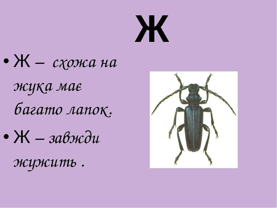 Ж – схожа на жука має багато лапок. Ж – завжди жужить . Ж