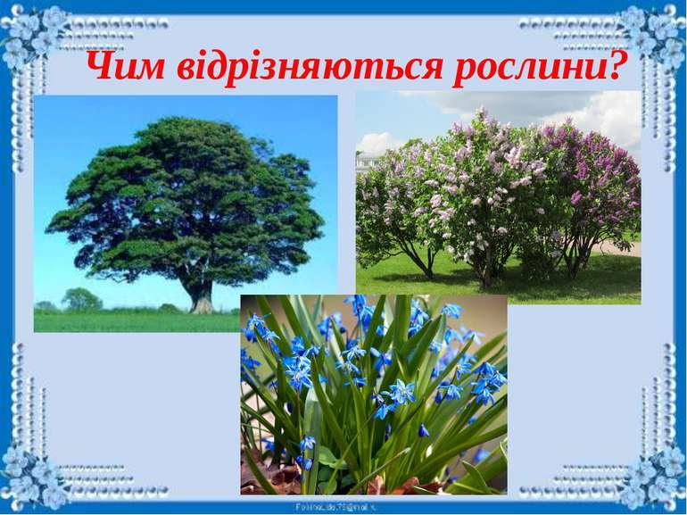 Як називаються ці рослини?