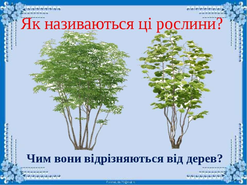 Які це рослини?