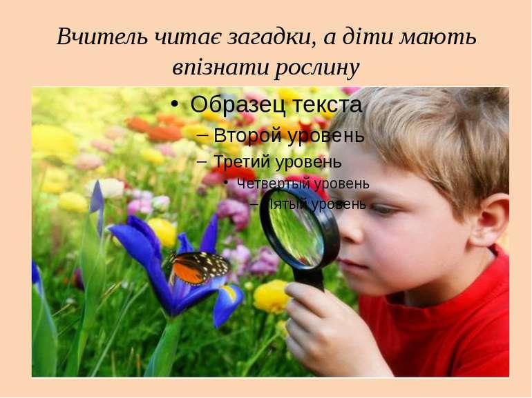 Вчитель читає загадки, а діти мають впізнати рослину