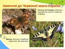Занесені до Червоної книги України Носатка листовидна, метелик з підсімейства...